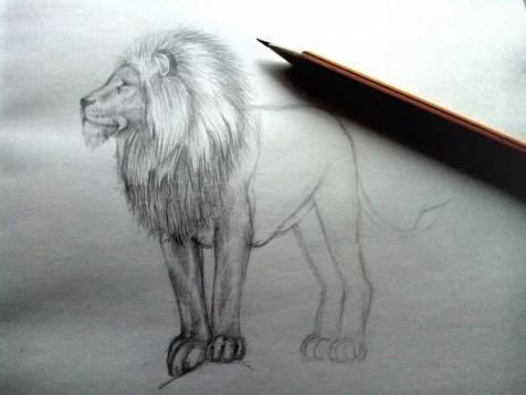 Как нарисовать льва карандашом? Шаг 9. Портреты карандашом - Fenlin.ru