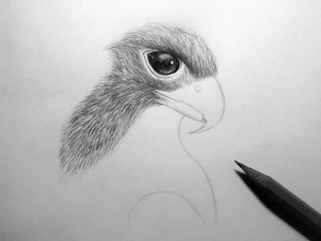 Как нарисовать орла карандашом? Шаг 13. Портреты карандашом - Fenlin.ru