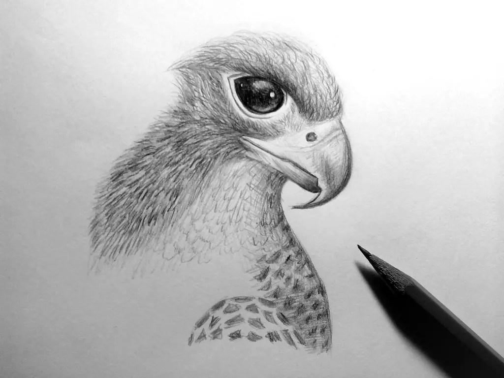 Как нарисовать орла карандашом? Шаг 17. Портреты карандашом - Fenlin.ru
