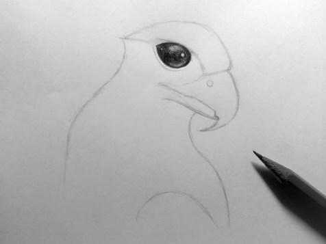 Как нарисовать орла карандашом? Шаг 8. Портреты карандашом - Fenlin.ru