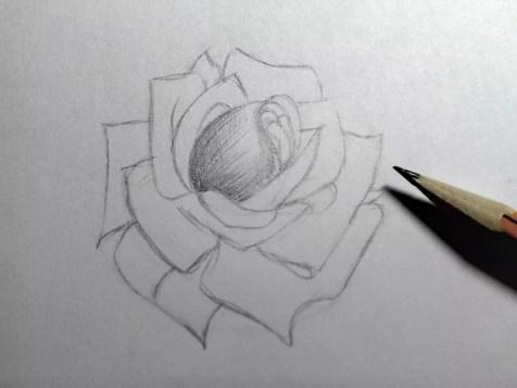 Как нарисовать розу карандашом? Шаг 11. Портреты карандашом - Fenlin.ru