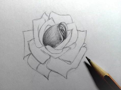 Как нарисовать розу карандашом? Шаг 12. Портреты карандашом - Fenlin.ru