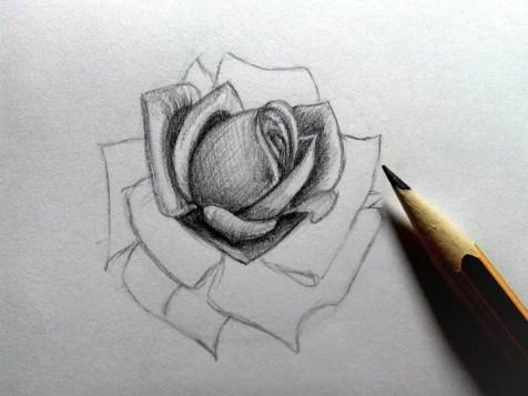 Как нарисовать розу карандашом? Шаг 14. Портреты карандашом - Fenlin.ru