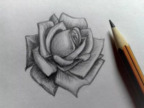 Как нарисовать розу карандашом? Шаг 16. Портреты карандашом - Fenlin.ru