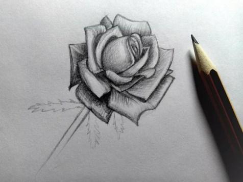 Как нарисовать розу карандашом? Шаг 17. Портреты карандашом - Fenlin.ru