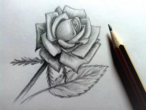 Как нарисовать розу карандашом? Шаг 20. Портреты карандашом - Fenlin.ru