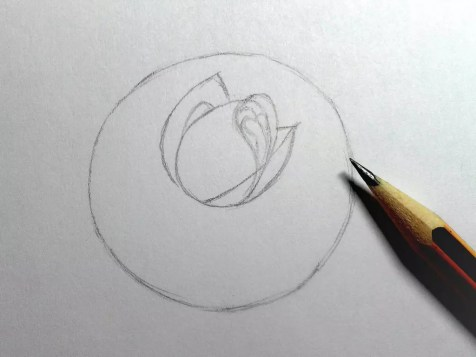 Как нарисовать розу карандашом? Шаг 5. Портреты карандашом - Fenlin.ru