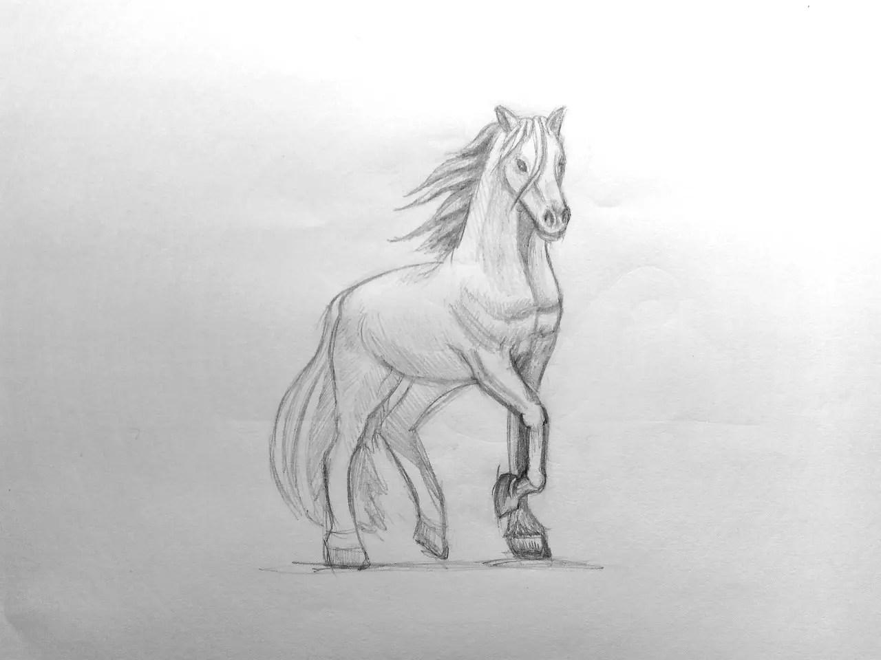 Как нарисовать лошадь карандашом? Поэтапный урок. Шаг 16. Портреты карандашом - Fenlin.ru