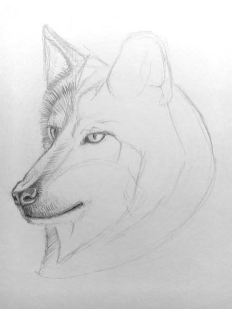 Как нарисовать волка карандашом? Поэтапный урок. Шаг 10. Портреты карандашом - Fenlin.ru