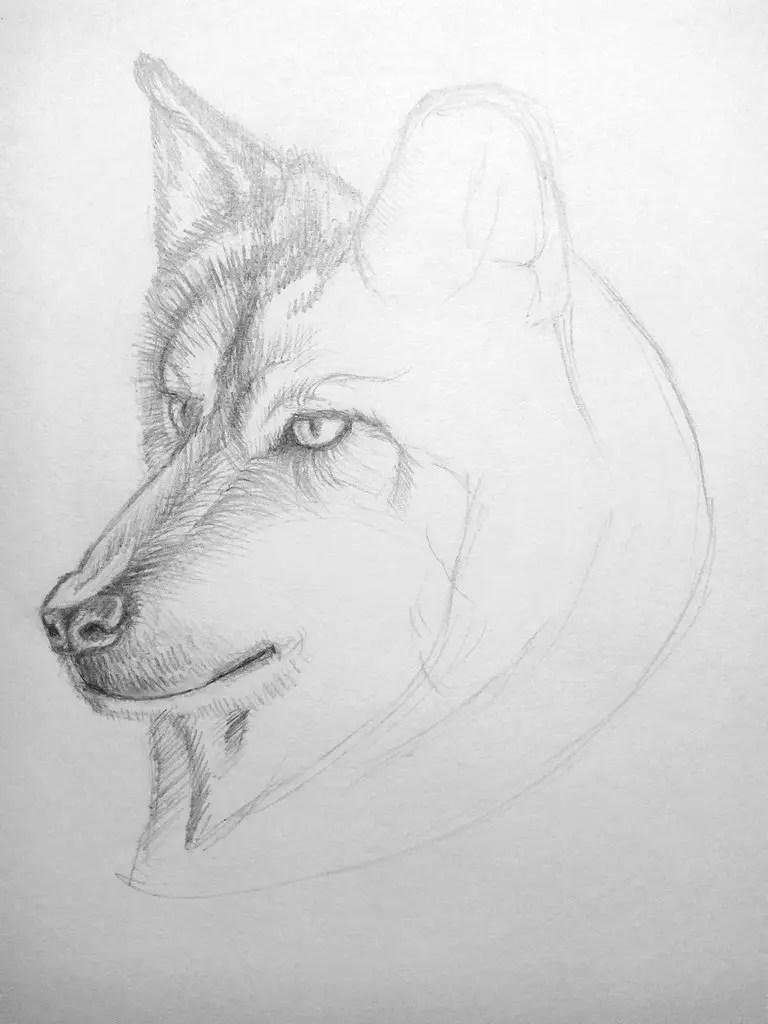 Как нарисовать волка карандашом? Поэтапный урок. Шаг 12. Портреты карандашом - Fenlin.ru