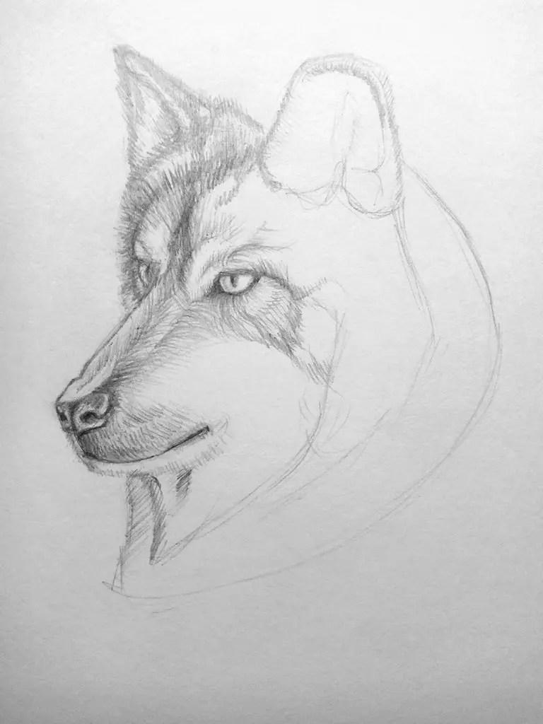 Как нарисовать волка карандашом? Поэтапный урок. Шаг 13. Портреты карандашом - Fenlin.ru