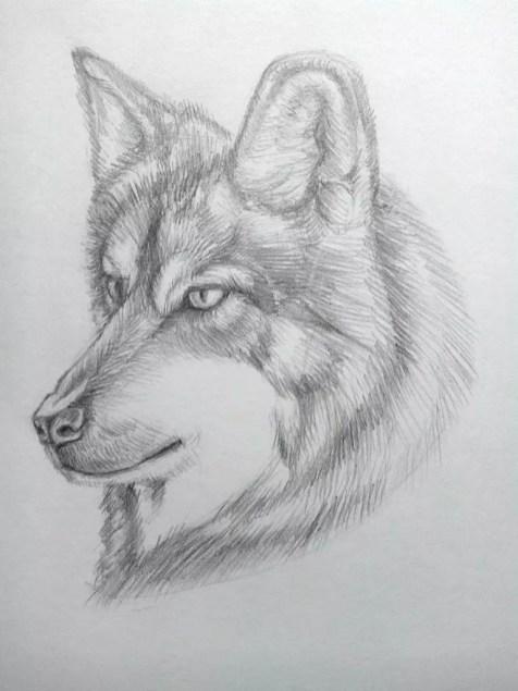 Как нарисовать волка карандашом? Поэтапный урок. Шаг 17. Портреты карандашом - Fenlin.ru