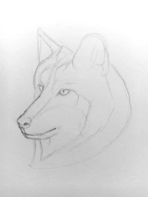 Как нарисовать волка карандашом? Поэтапный урок. Шаг 7. Портреты карандашом - Fenlin.ru