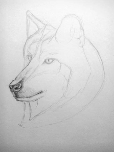 Как нарисовать волка карандашом? Поэтапный урок. Шаг 8. Портреты карандашом - Fenlin.ru