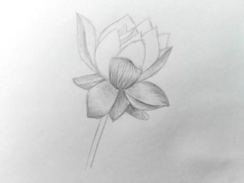 Как нарисовать цветок карандашом? Поэтапный урок. Шаг 11. Портреты карандашом - Fenlin.ru