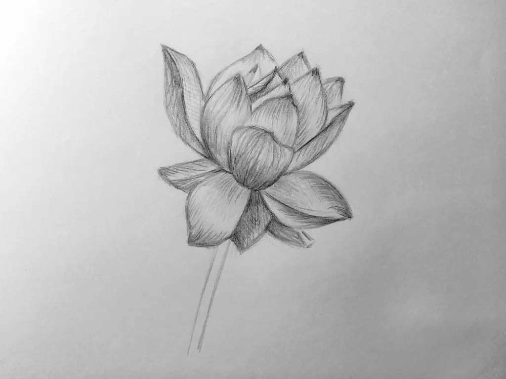 Как нарисовать цветок карандашом? Поэтапный урок. Шаг 13. Портреты карандашом - Fenlin.ru