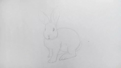 Как нарисовать кролика карандашом? Шаг 10. Портреты карандашом - Fenlin.ru