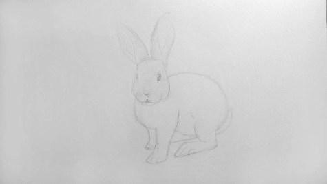 Как нарисовать кролика карандашом? Шаг 11. Портреты карандашом - Fenlin.ru