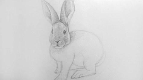 Как нарисовать кролика карандашом? Шаг 14. Портреты карандашом - Fenlin.ru