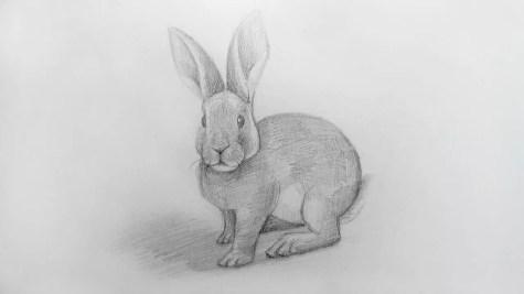 Как нарисовать кролика карандашом? Шаг 19. Портреты карандашом - Fenlin.ru