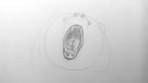 Как нарисовать медведя карандашом? Шаг 10. Портреты карандашом - Fenlin.ru