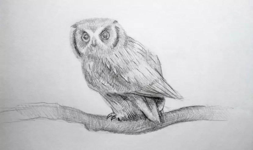 Как нарисовать сову карандашом? Шаг 1. Поэтапный урок. Портреты карандашом - Fenlin.ru