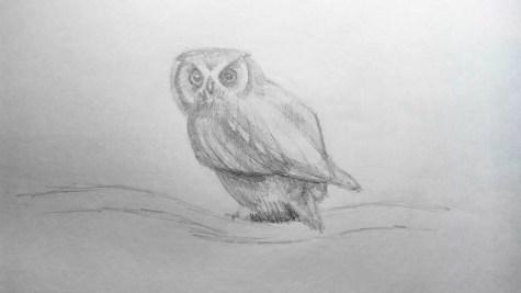 Как нарисовать сову карандашом? Шаг 13. Портреты карандашом - Fenlin.ru