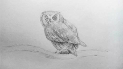 Как нарисовать сову карандашом? Шаг 14. Портреты карандашом - Fenlin.ru