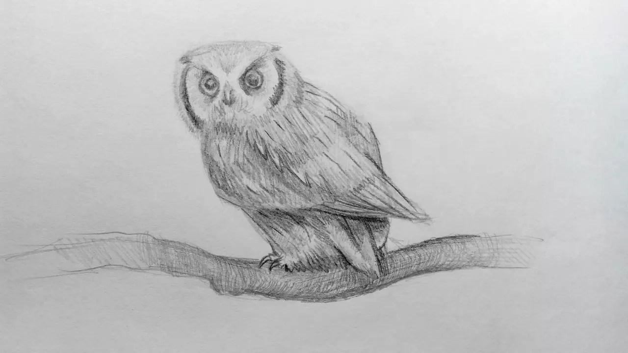 Как нарисовать сову карандашом? Шаг 16. Портреты карандашом - Fenlin.ru