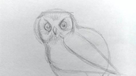 Как нарисовать сову карандашом? Шаг 6. Портреты карандашом - Fenlin.ru
