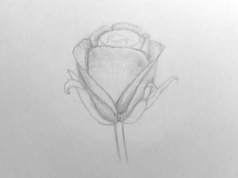 Как нарисовать розу карандашом для детей? Шаг 12. Портреты карандашом - Fenlin.ru