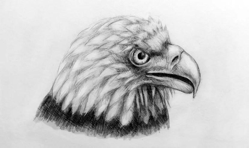 Как нарисовать орла карандашом? Портреты карандашом - Fenlin.ru