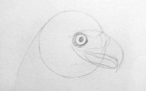 Как нарисовать орла карандашом? Шаг 6. Портреты карандашом - Fenlin.ru