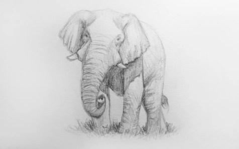 Как нарисовать слона карандашом? Шаг 10. Портреты карандашом - Fenlin.ru