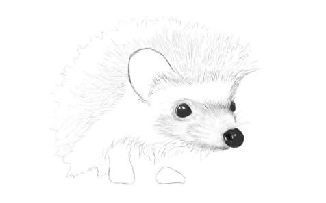 Как нарисовать ежика карандашом? Шаг 10. Портреты карандашом - Fenlin.ru