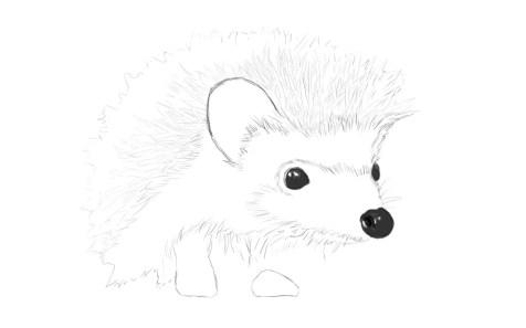 Как нарисовать ежика карандашом? Шаг 9. Портреты карандашом - Fenlin.ru