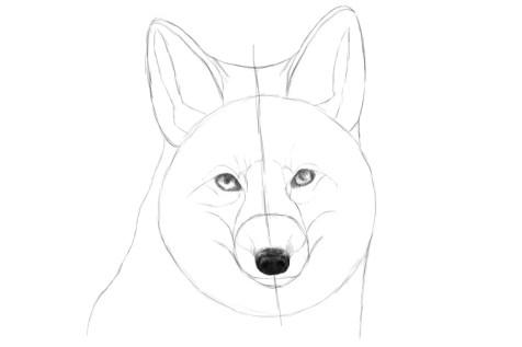 Как нарисовать лису на графическом планшете? Шаг 10. Портреты карандашом - Fenlin.ru