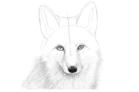 Как нарисовать лису на графическом планшете? Шаг 14. Портреты карандашом - Fenlin.ru