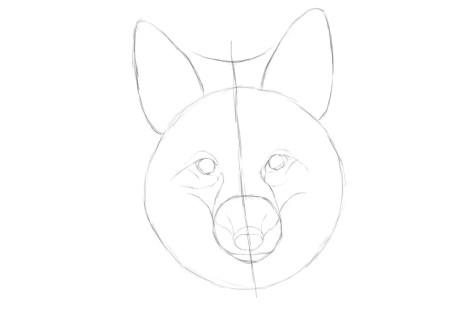 Как нарисовать лису на графическом планшете? Шаг 6. Портреты карандашом - Fenlin.ru
