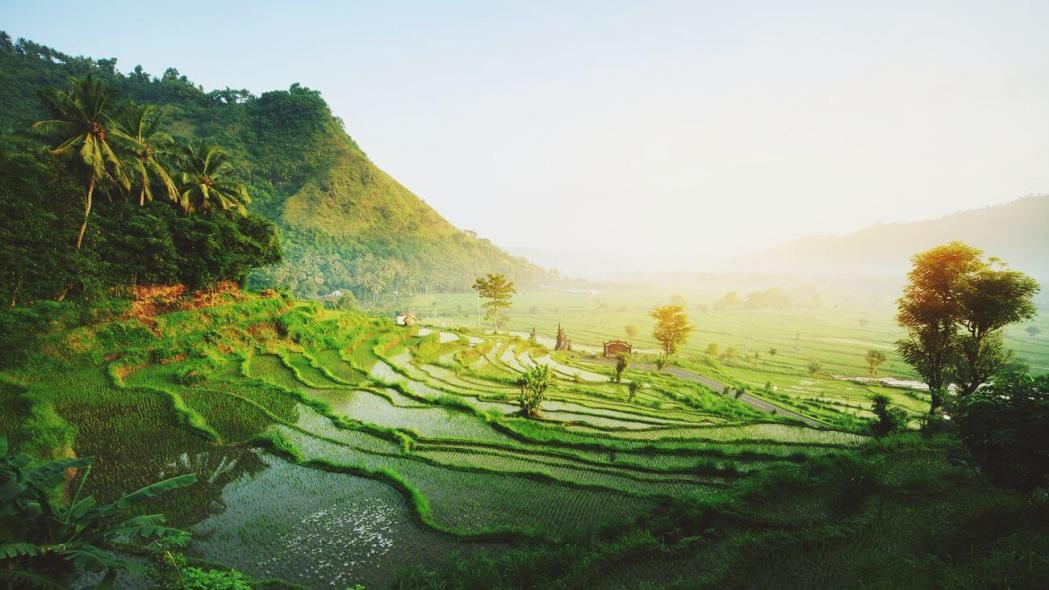 rice fields at sunrise in ubud, bali