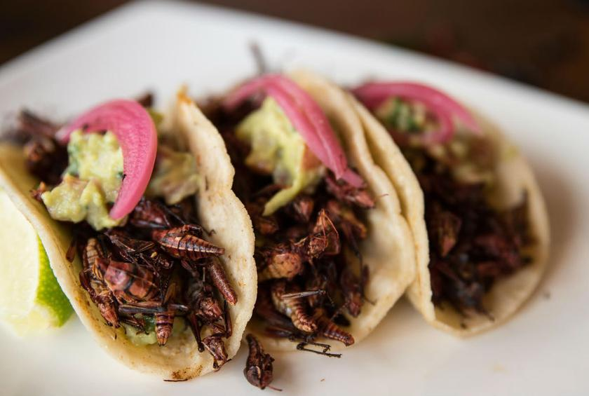 grasshopper taco