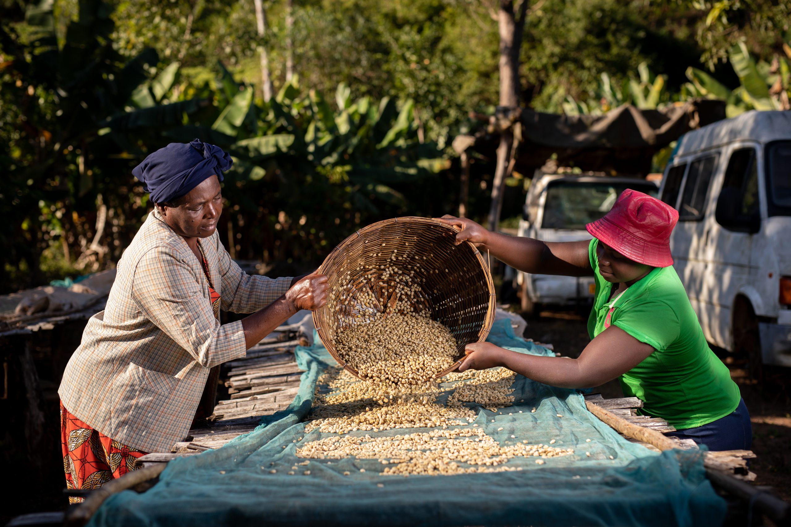 Nespresso_Zimbabwe_AAA Fair Trade-15