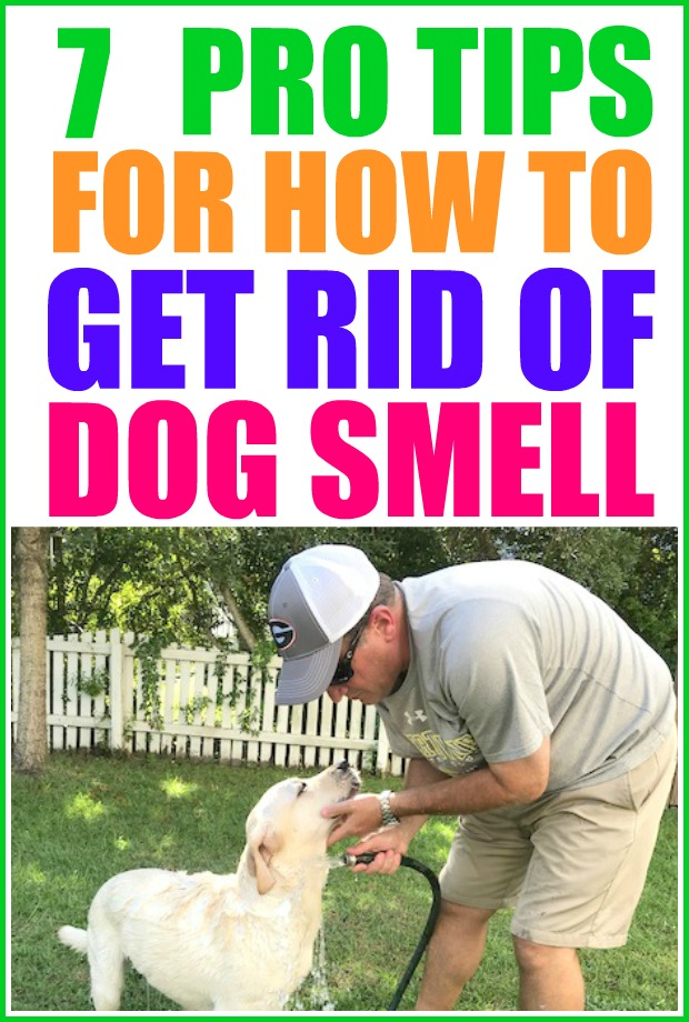 How to get rid of dog smell in your home.   pet smell neutralizer   dog smell   pet smell  