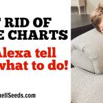 No More Chore Charts! Let Alexa Remind Your Kids.