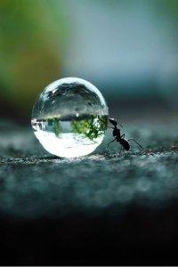 vízcsepp hangyával fenntarthato.cafeblog