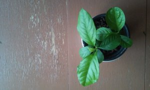 panel citrom fenntarthato.cafeblog
