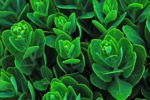 1195661_Lovely-green-Plant_620