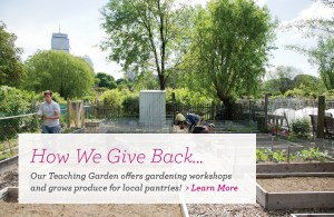 Fenway Victory Gardens: How we Give Back
