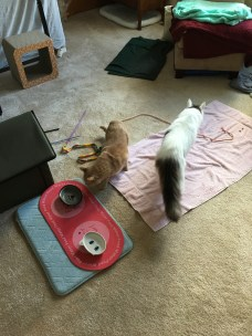Jake and Marvin checking out Cisco's room
