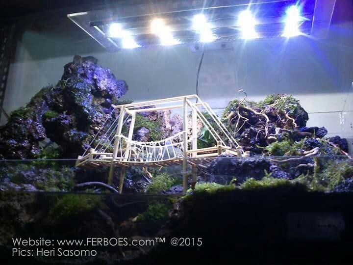 Aquascape: Ada Tebing Dan Jembatan Gantungnya… | Ferboes.com